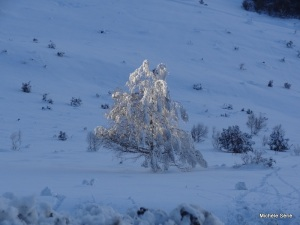 Fragilité et délicatesse de ce dernier rayon de soleil sur cet arbre de neige