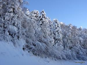 Magie de ces forêts enneigées vers Espiaube Saint-Lary Pla d'Adet